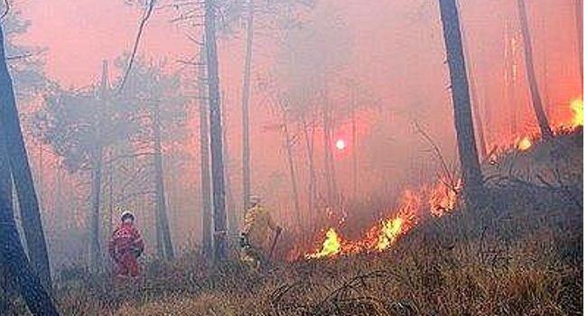 incendi in costiera