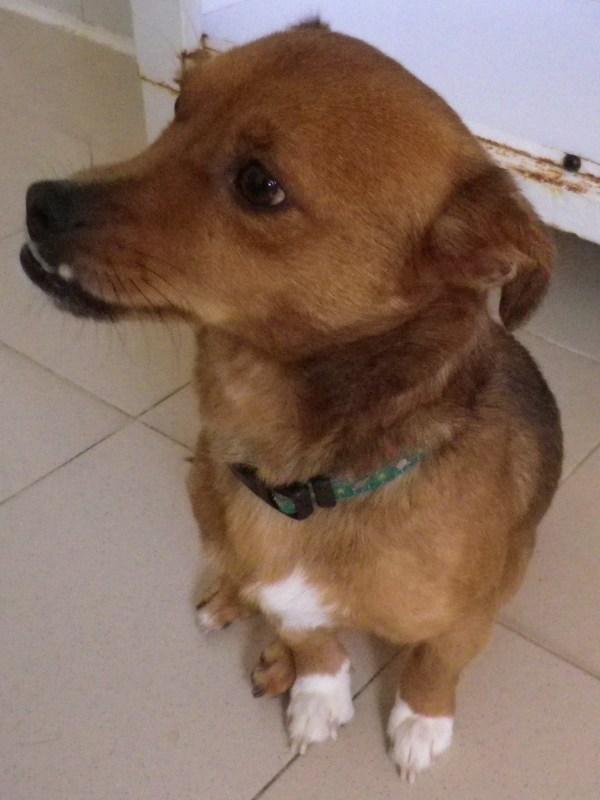 foto de Cani per strada: storie di un amicizia tradita