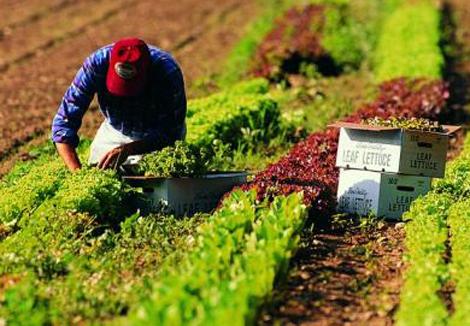 bracciante campi agricoltura