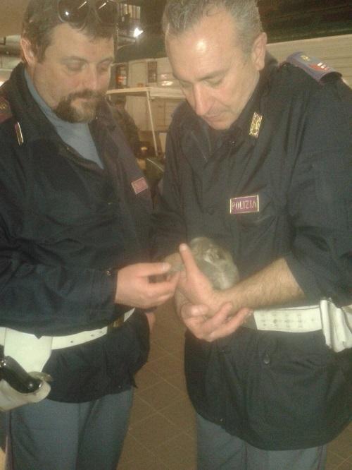 polizia gattini