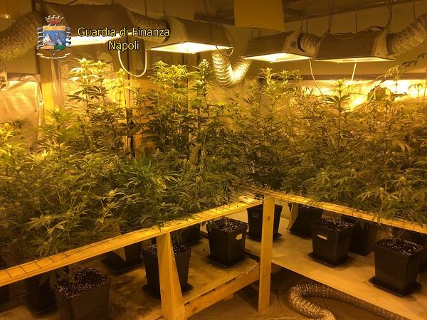 marijuana indoor 1