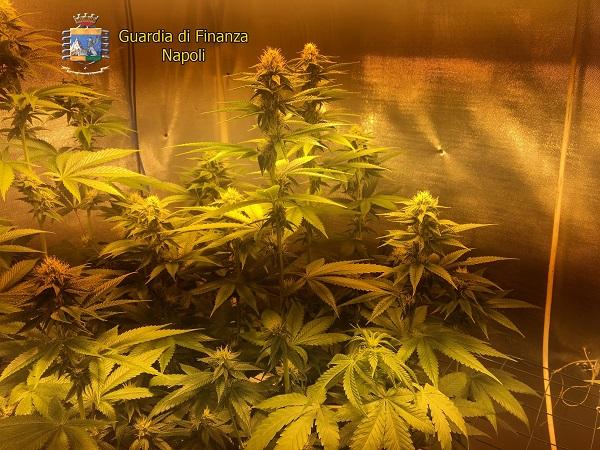 marijuana indoor