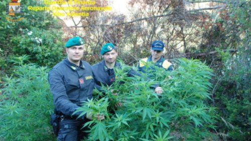 guardia di finanza marijuana