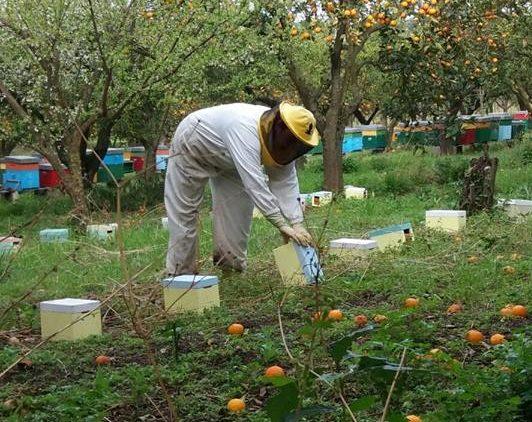 apicoltori api vesuvio