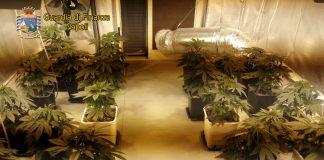 marijuana indoor villaricca finanza