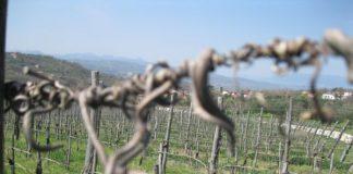 produttori vino benevento