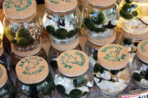 Marimo souvenir - Algapalla souvenir - Moss Ball souvenir