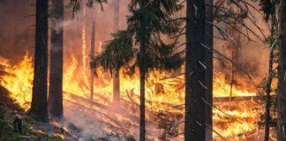 emergenza incendi campania legambiente