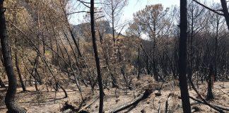 incendi in Campania