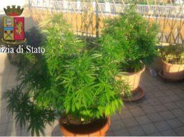 marijuana in terrazzo