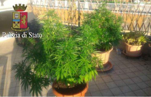 marijuana in terrazzo sorrento