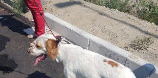 salvataggio cane abbandonato
