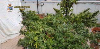 marijuana ottaviano