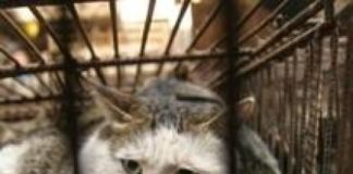 coronavirus gatti