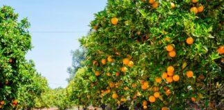 arance virus